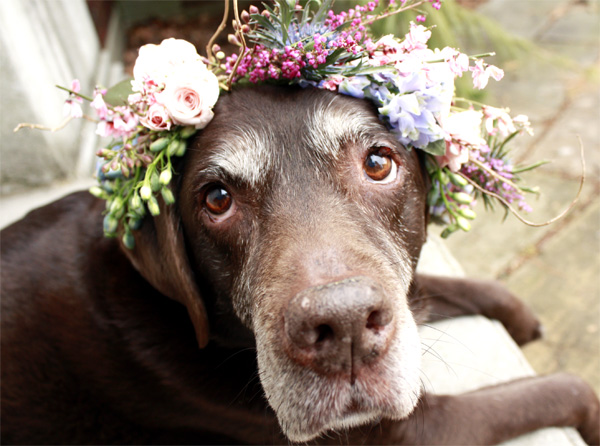 Flower Crown For Dogs Wear Wag Repeat