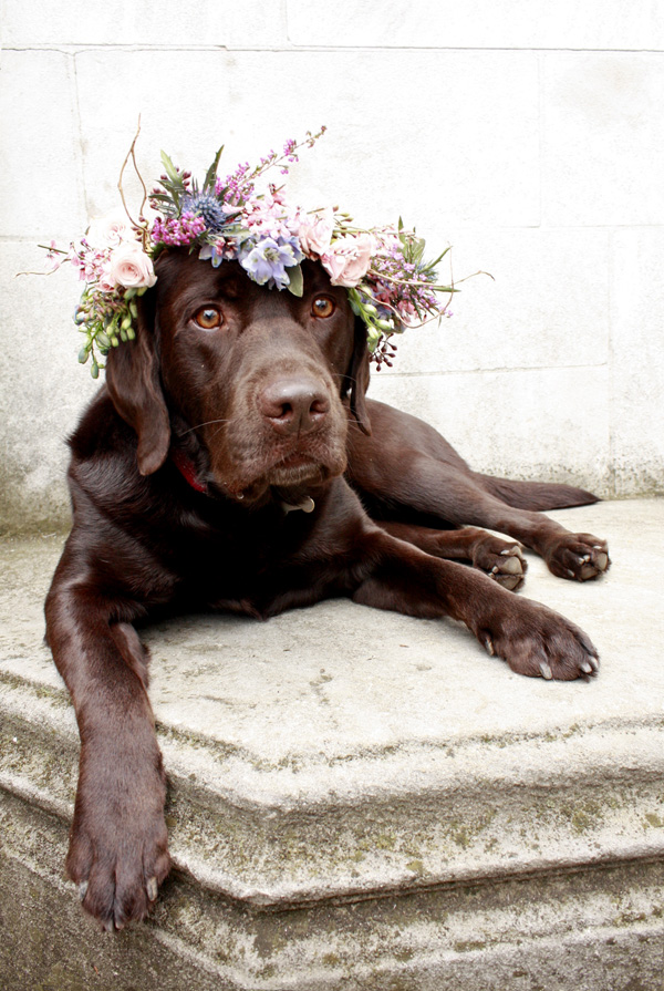 Flower Crown for Dogs
