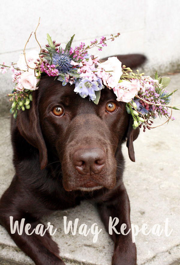 Chocolate lab flower crown