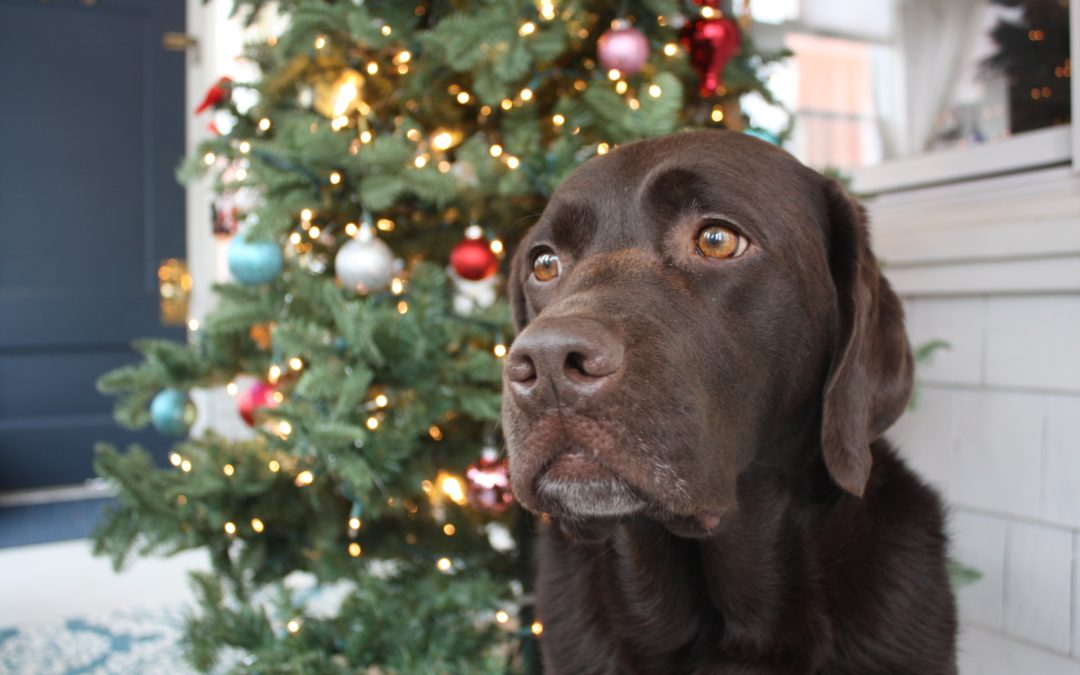 Gift Guide for Lab Lovers