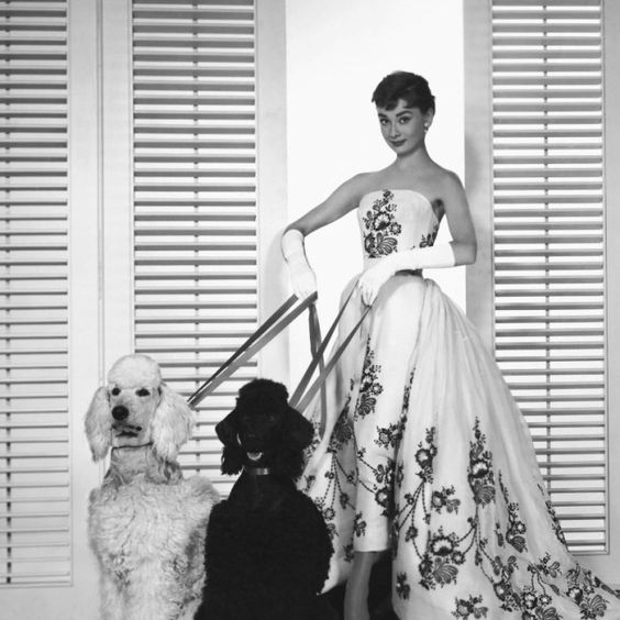 Audrey Hepburn with Dogs