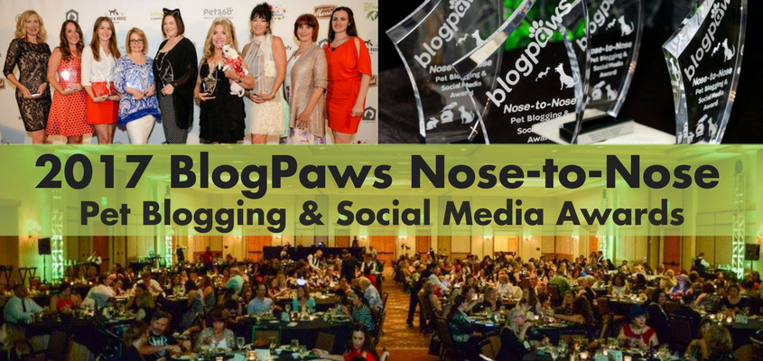 I'm a Best Pet Blog Design Finalist