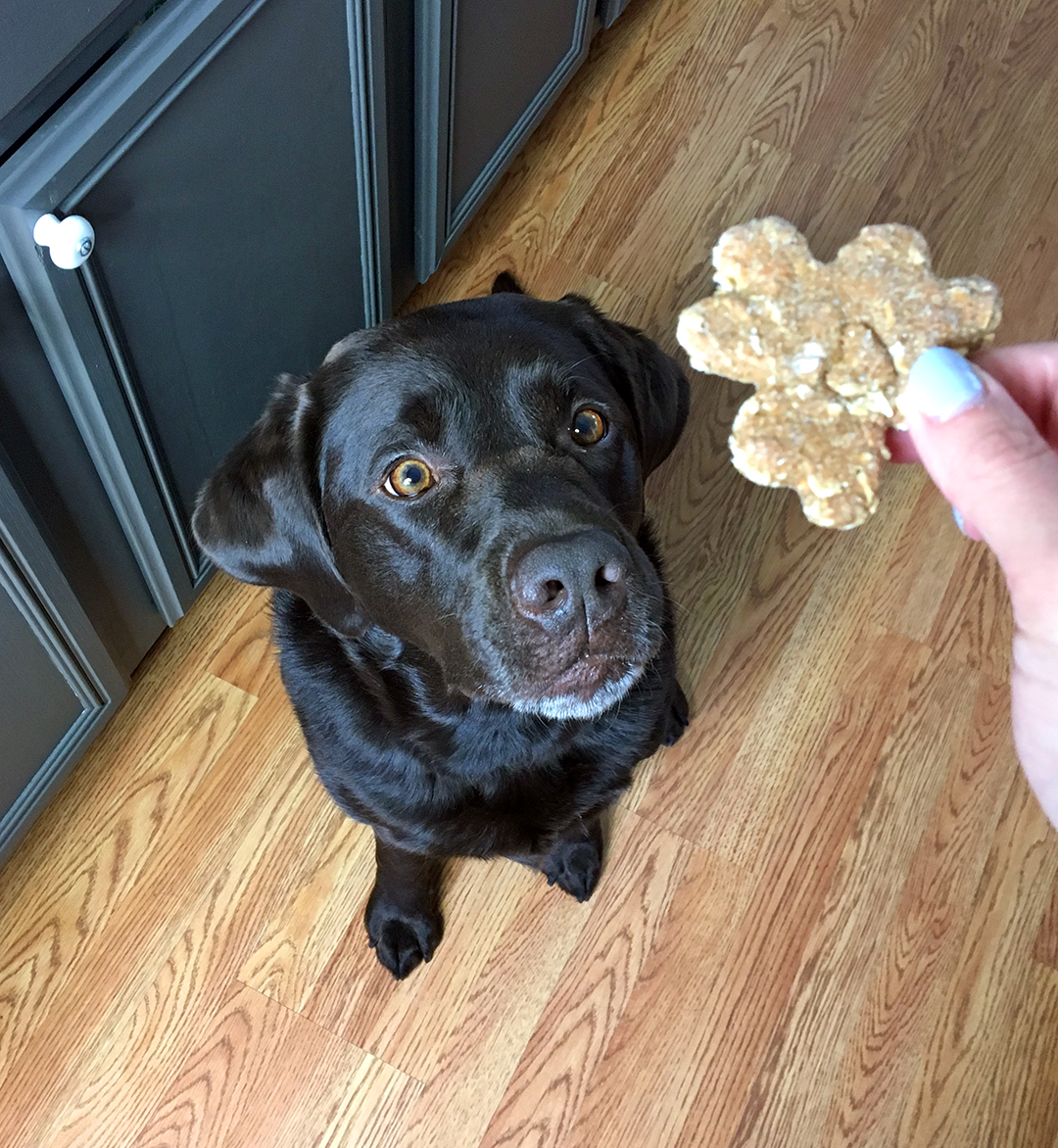 Lab Tested Treats and Toys in the Pup Joy Box