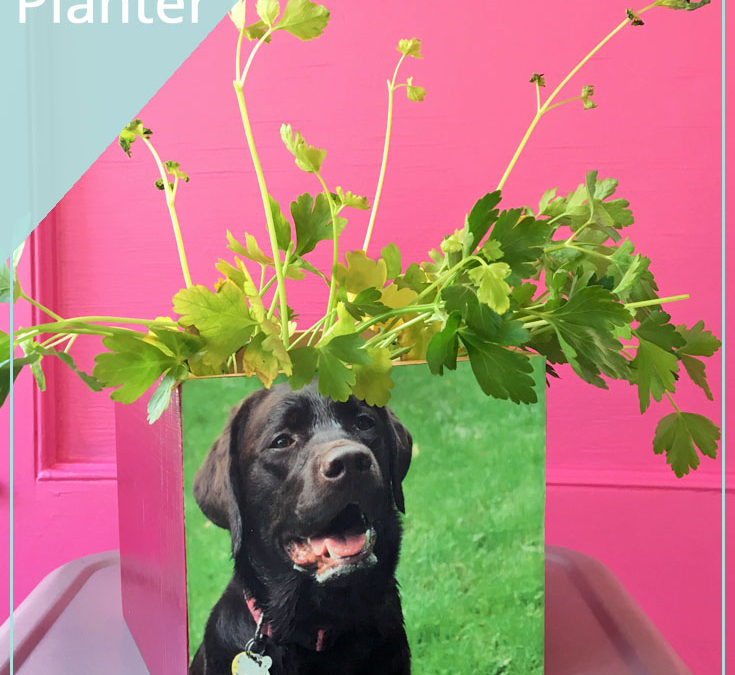 DIY Dog Friendly Herbs Decoupage Planter