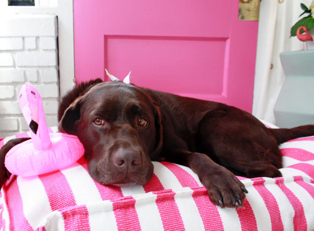 I Found the best pink dog bed to match my pink door