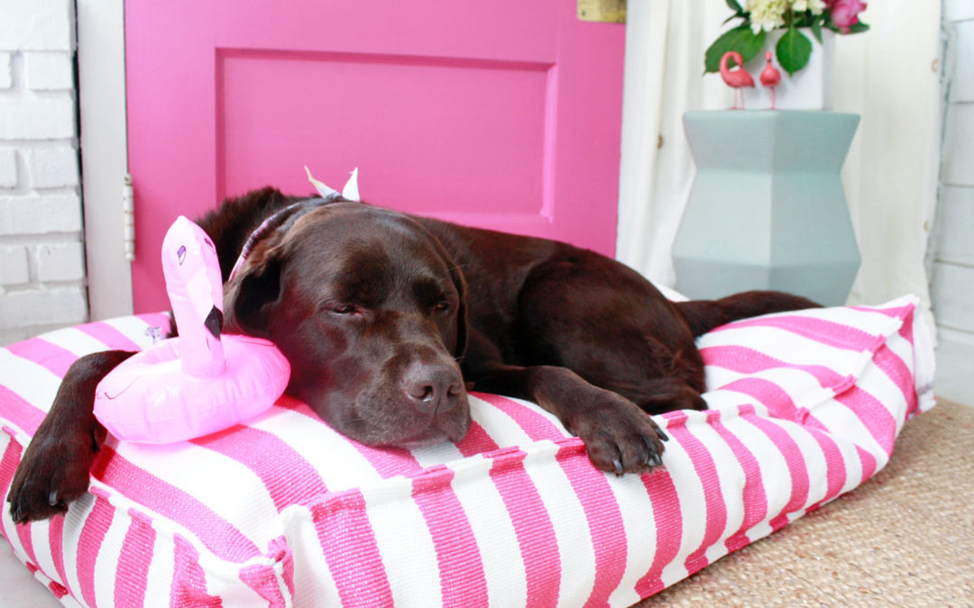 I Found The Best Pink Dog Bed to Match My Pink Door!