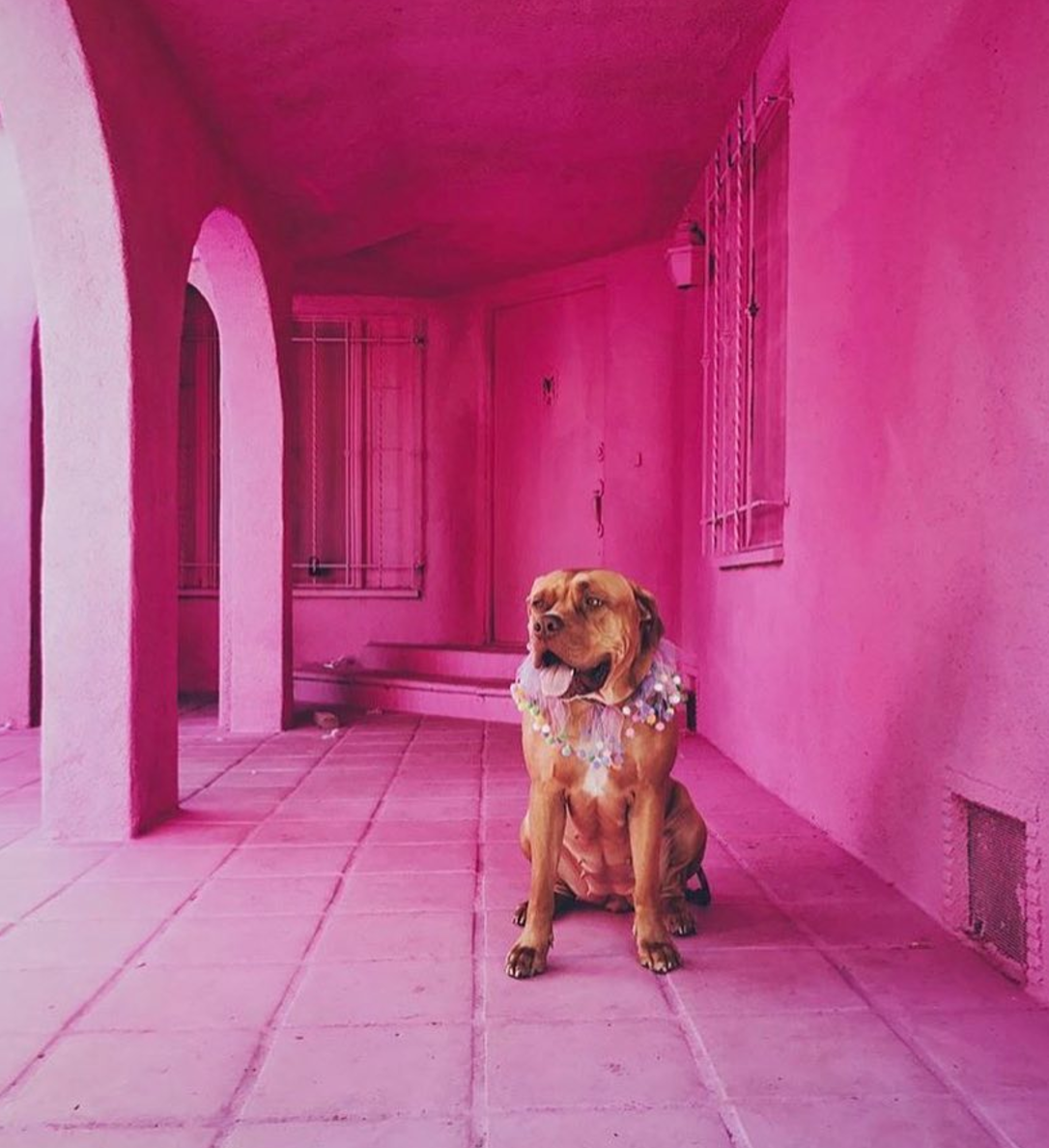 siatheboerboel pink house by themostfamousartist