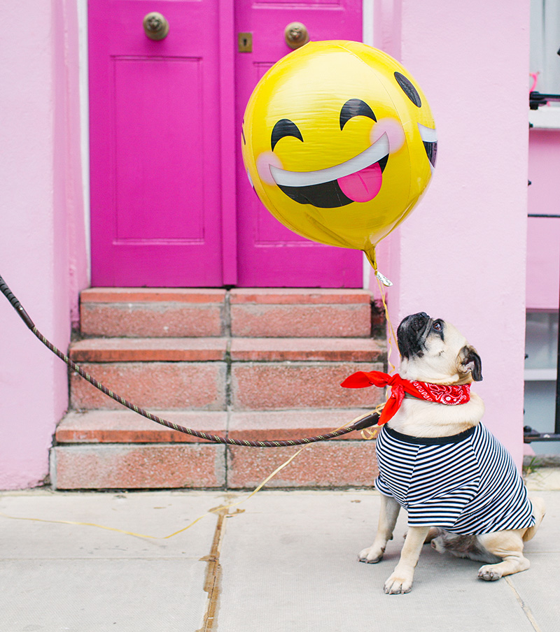 Pups and Pink Doors Photo Round Up