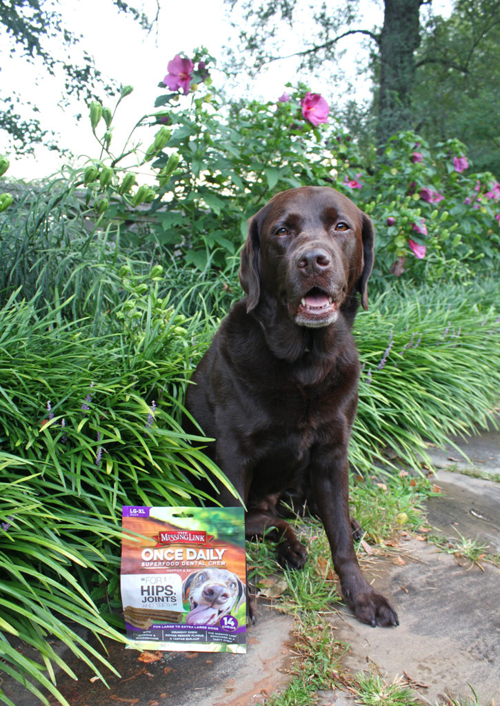 What's The Missing Link In Your Dog's Diet