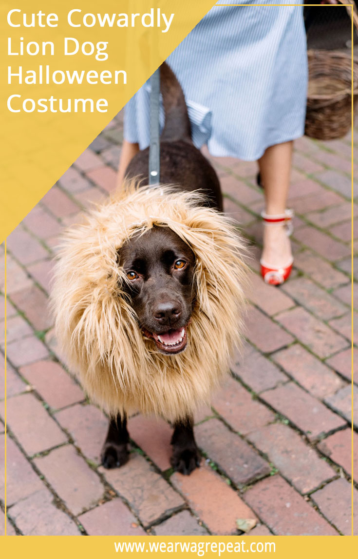 Halloween Couples Costume: Dorothy and The Lion