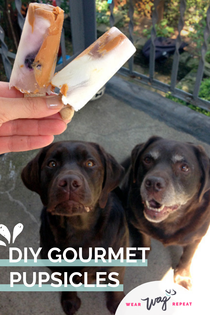 DIY: GOURMET PUPSICLES FROZEN DOG TREAT RECIPE