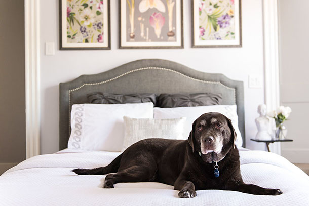 Refresh Your Bedroom: Just Add Pillows, Flowers & Dog