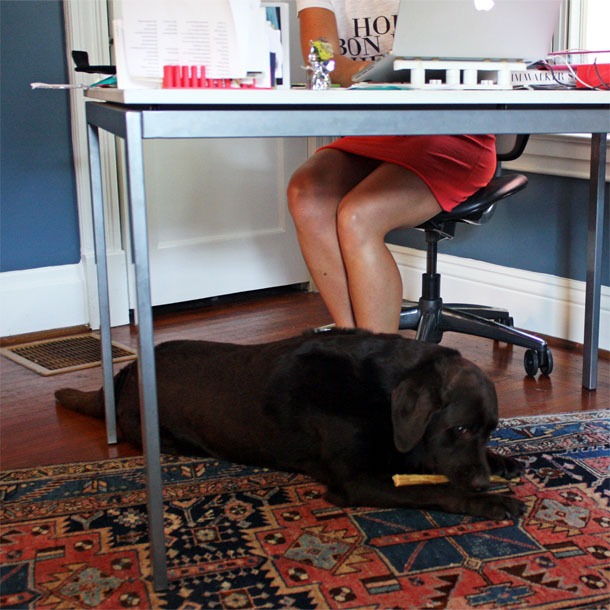 number one secret to working from home with dogs. Black Bedroom Furniture Sets. Home Design Ideas