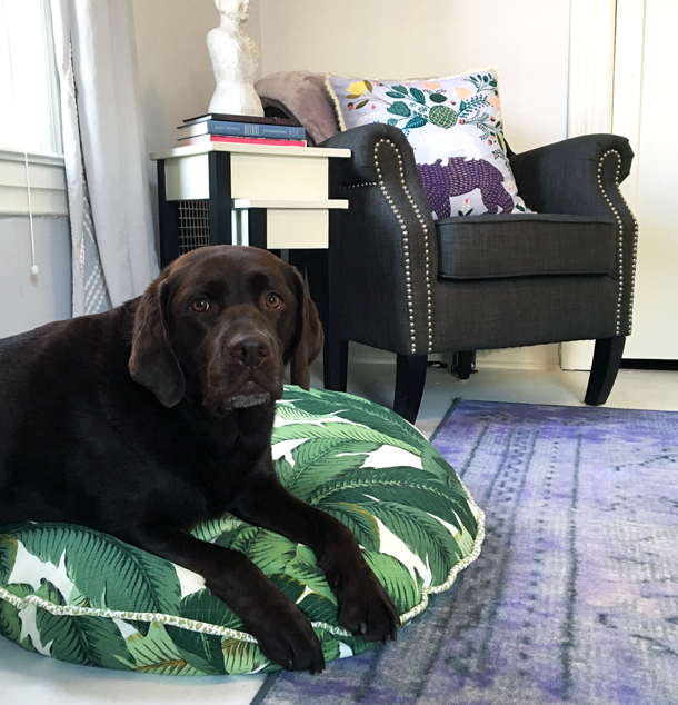 Check out how to make a stylish dog bed cover that goes with your decor. My step by step sewing guide will have you and your dog styling in no time. I made this in just a few hours!