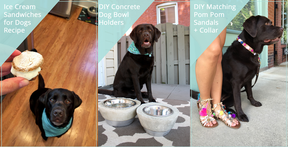 DIY Projects for Dogs