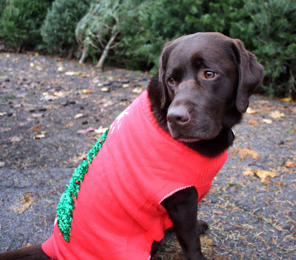 Tgif It S An Ugly Sweater Pawty For Dogs