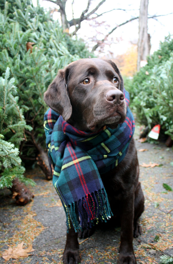 Keep Pets Warm with the Gift of Love