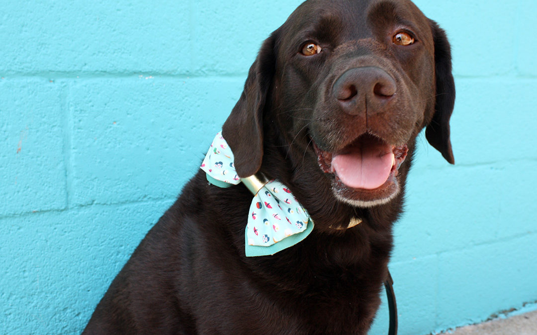 Learn How To Make A Stylish Doggy Bow Tie