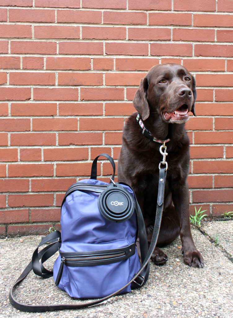 Essentials for An Urban Adventure with Your Dog