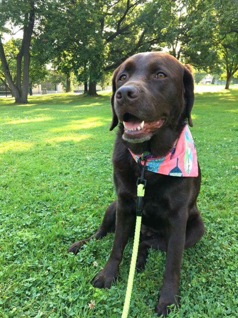 What I've learned to keep my dog healthy and happy