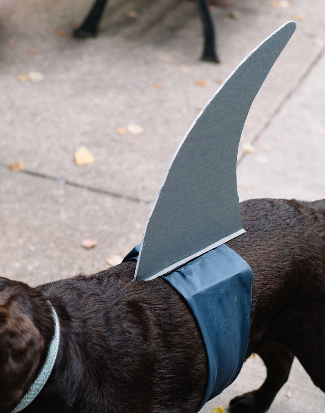 Halloween Couples Costume With Your Dog Surfer Girl and Shark