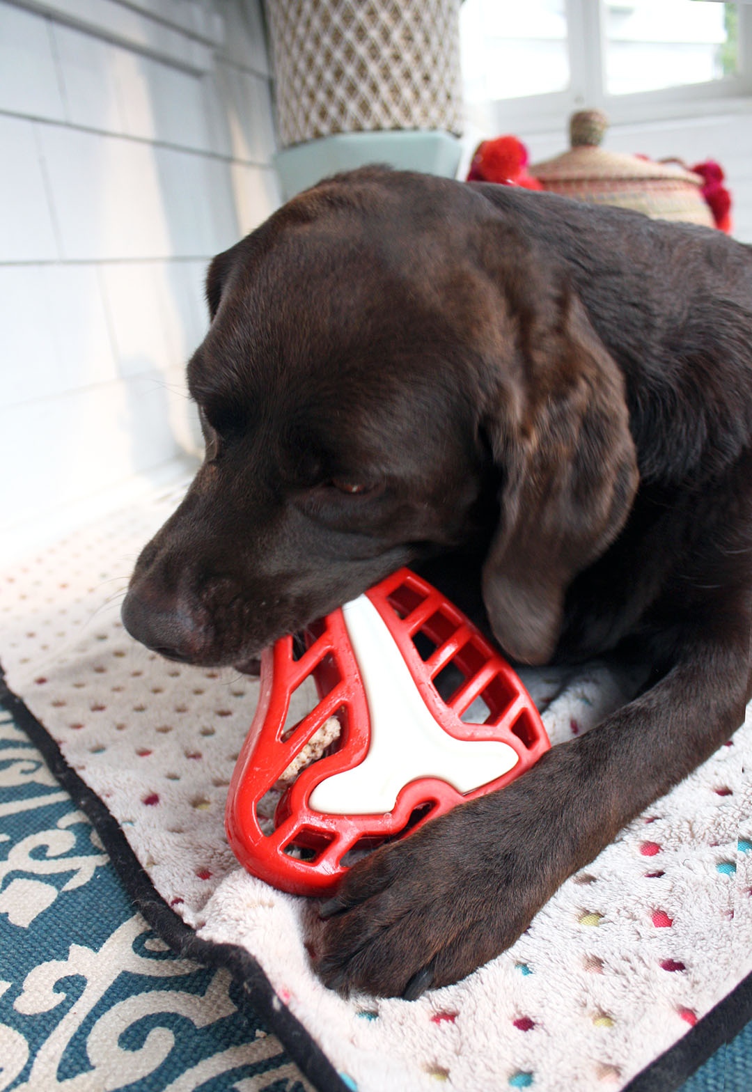 Four Delicious Ways to Play with Interactive Dog Toys