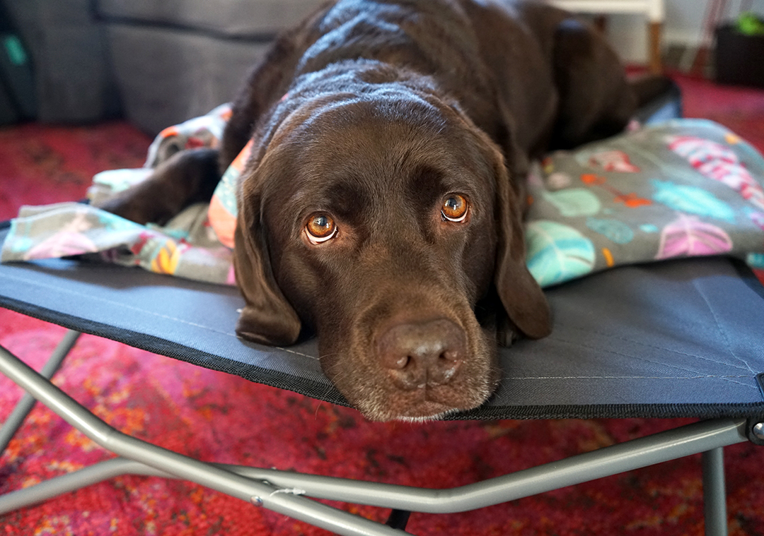DIY How To Match Your Dog Bed To Your Decor