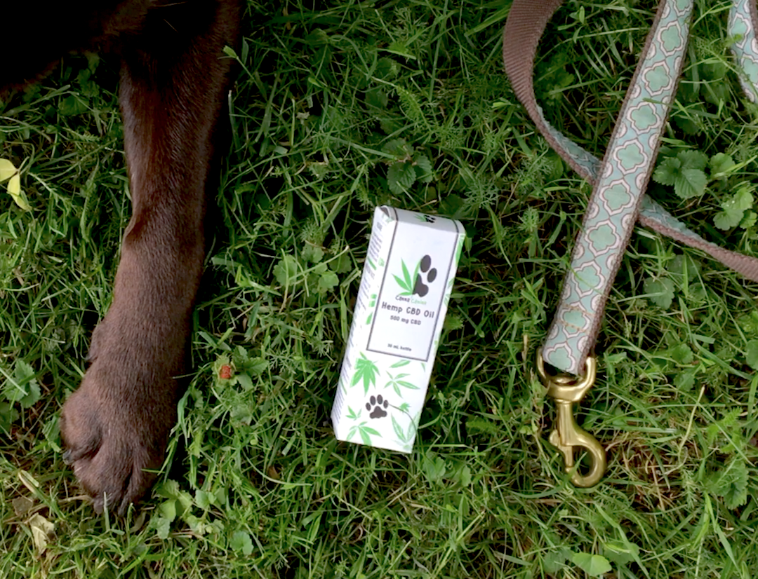 The Benefits of CannaCanine CBD Oil for Dogs