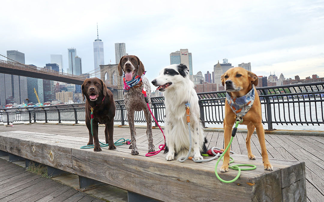 Planning A Dog Friendly Trip To New York City