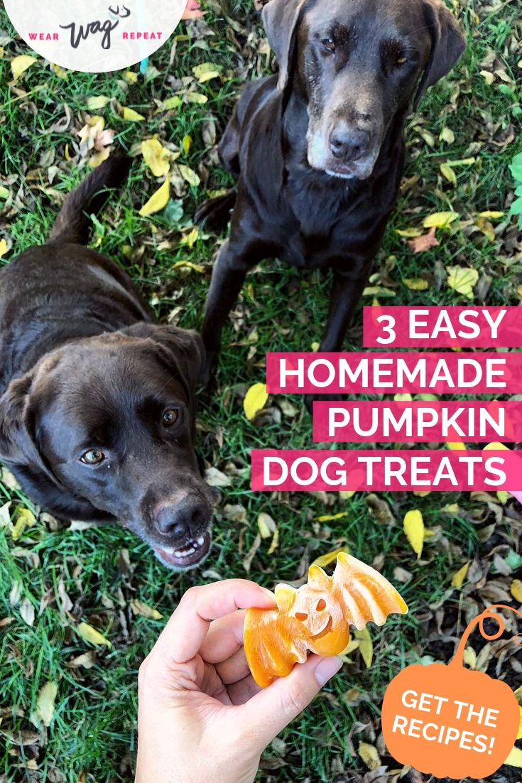 3 pumpkin dog treat recipes