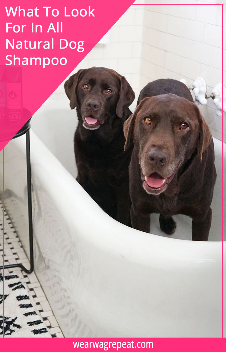jumping in the bath with all-natural Rufus & Coco!