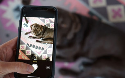 How To Take Better Dog Photos for Instagram