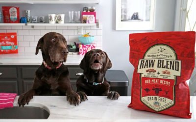 Choosing The Best Food For My Dog