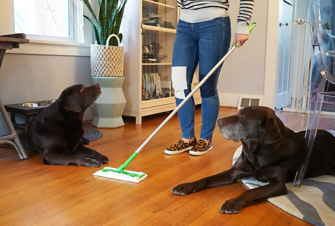 The Best Swiffer Buys for Dog Moms