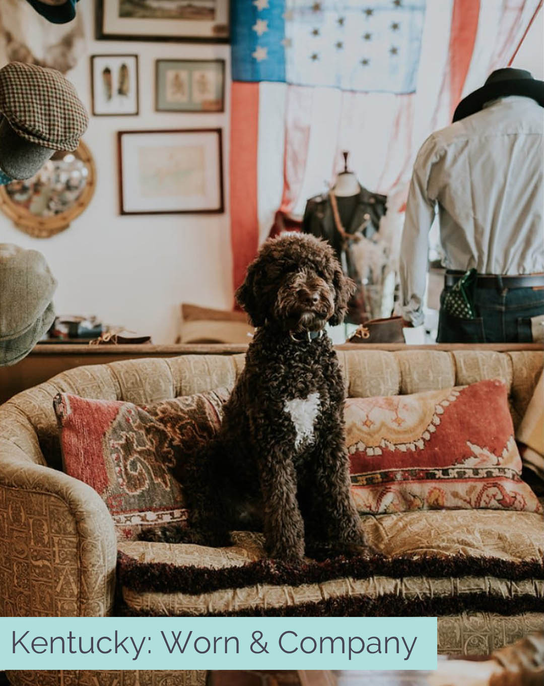 the best dog friendly shops across America