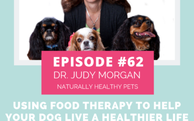 Podcast Episode 94: From the Archives: Using Food Therapy to Help Your Dog Live a Healthier Life