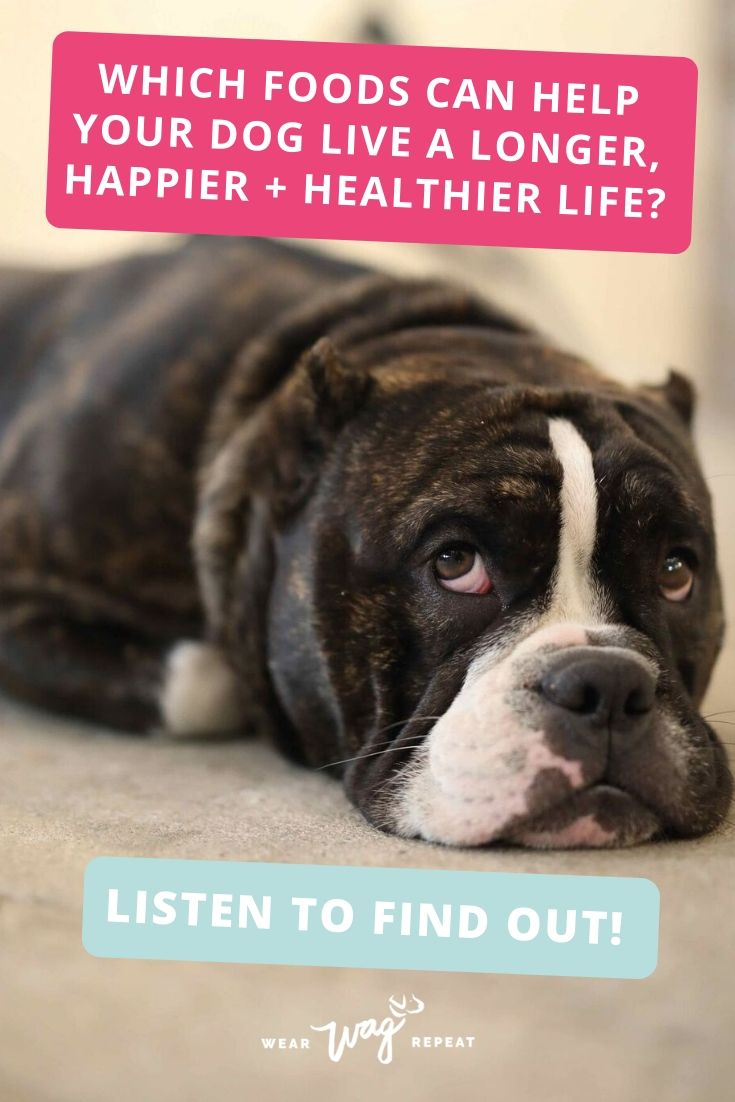 Using Food Therapy To Help Your Dog Live a Healthier Life With Judy Morgan