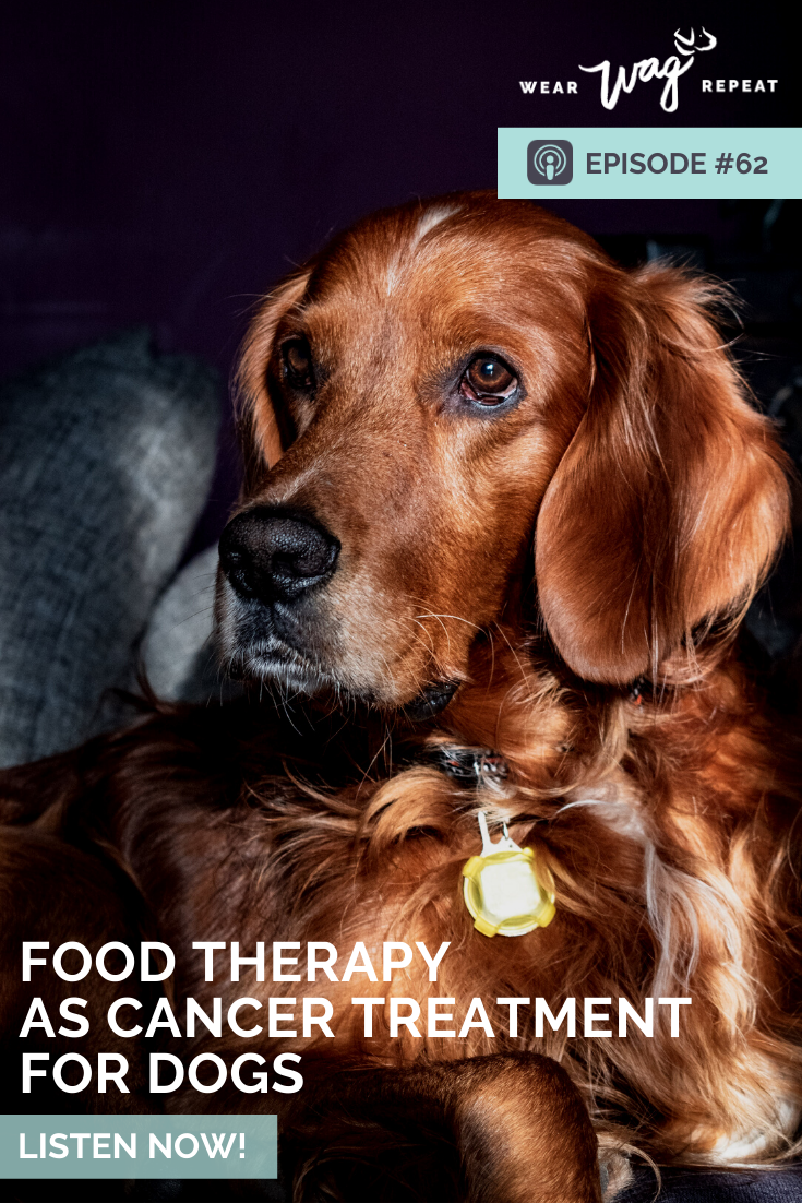 Food therapy as cancer treatment for dogs