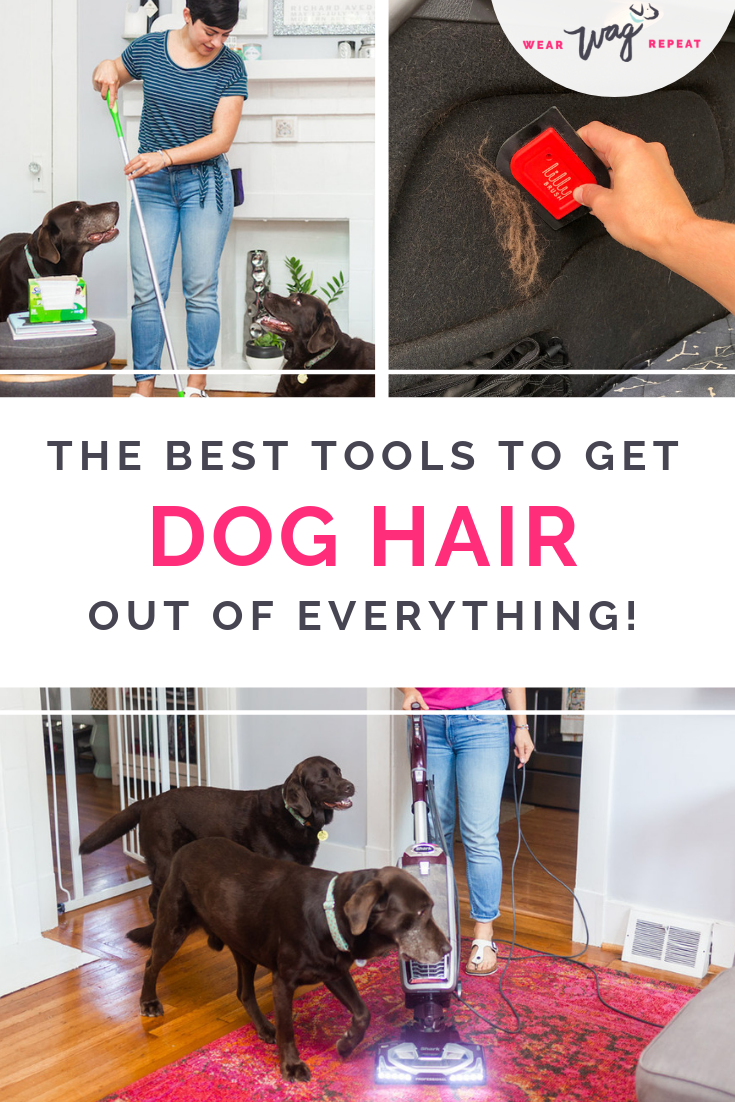 Thanks to my two dogs we have dog hair everywhere! I found the best cleaning tools to get dog hair out of anything. Your carpet, hard floors, couch, car and clothes don't have to scream