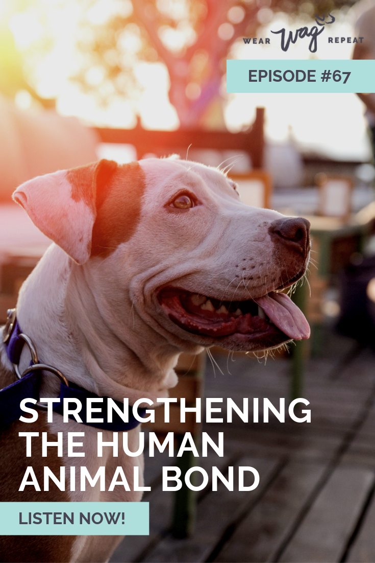 Strengthening the Human and Dog Bond with Technology: Collette Bunton CEO of Whistle on the Wear Wag Repeat Podcast