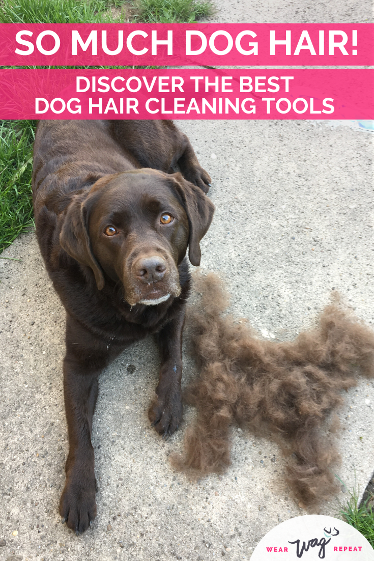 dog hair cleaning tools