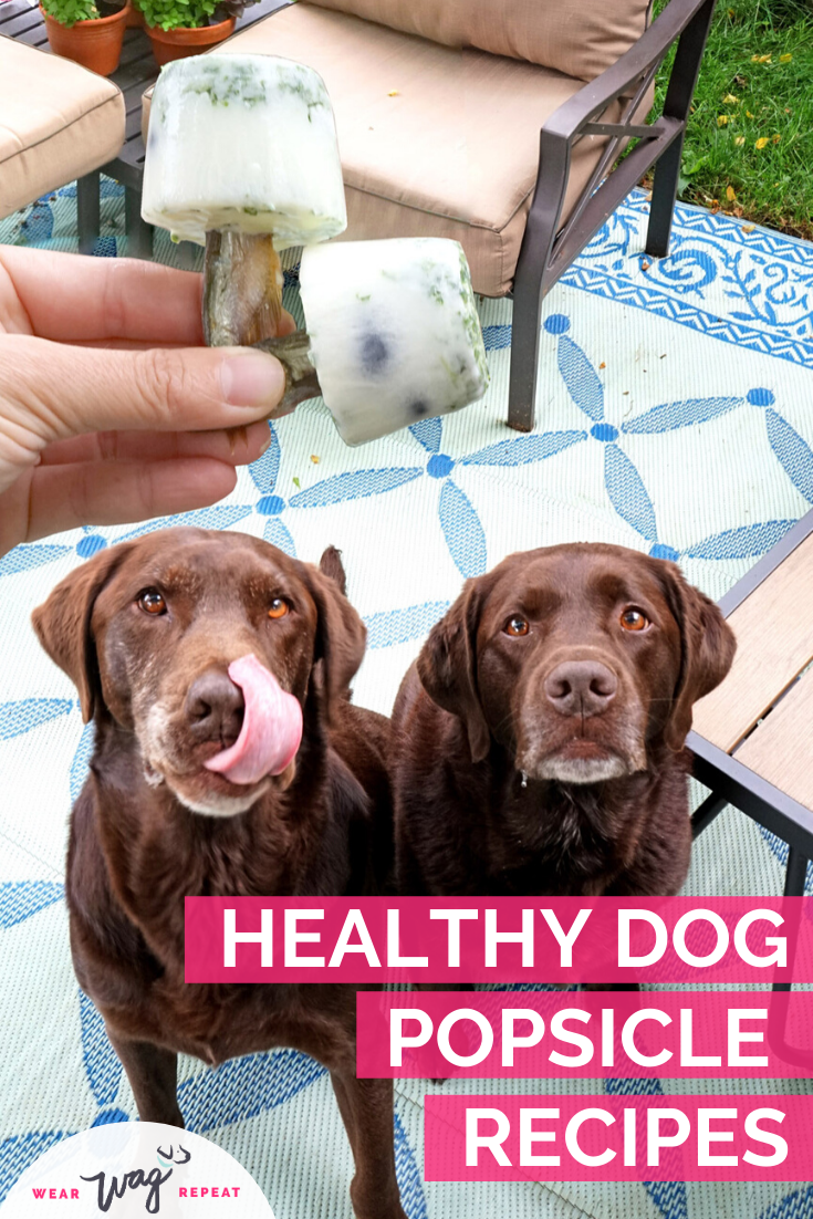 healthy dog popsicles