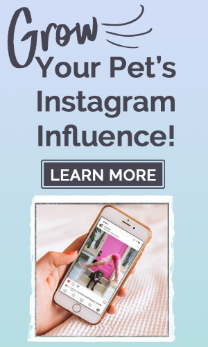 Grow Your Pet's Instagram Account