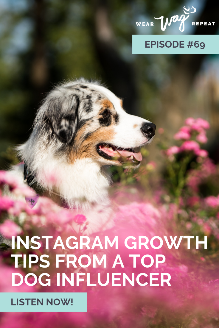 Grow Your Dog's Instagram account with MyCanineLife dog Influencer