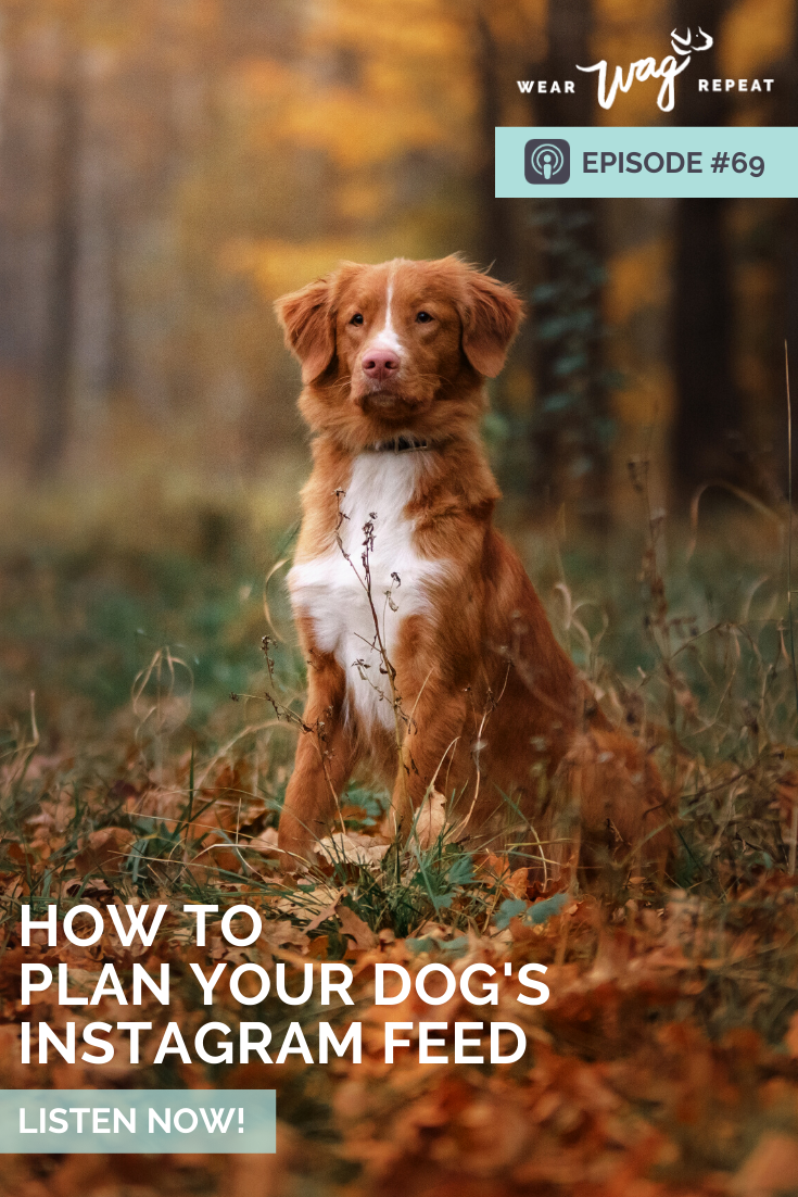 how to plan your dogs instagram feed