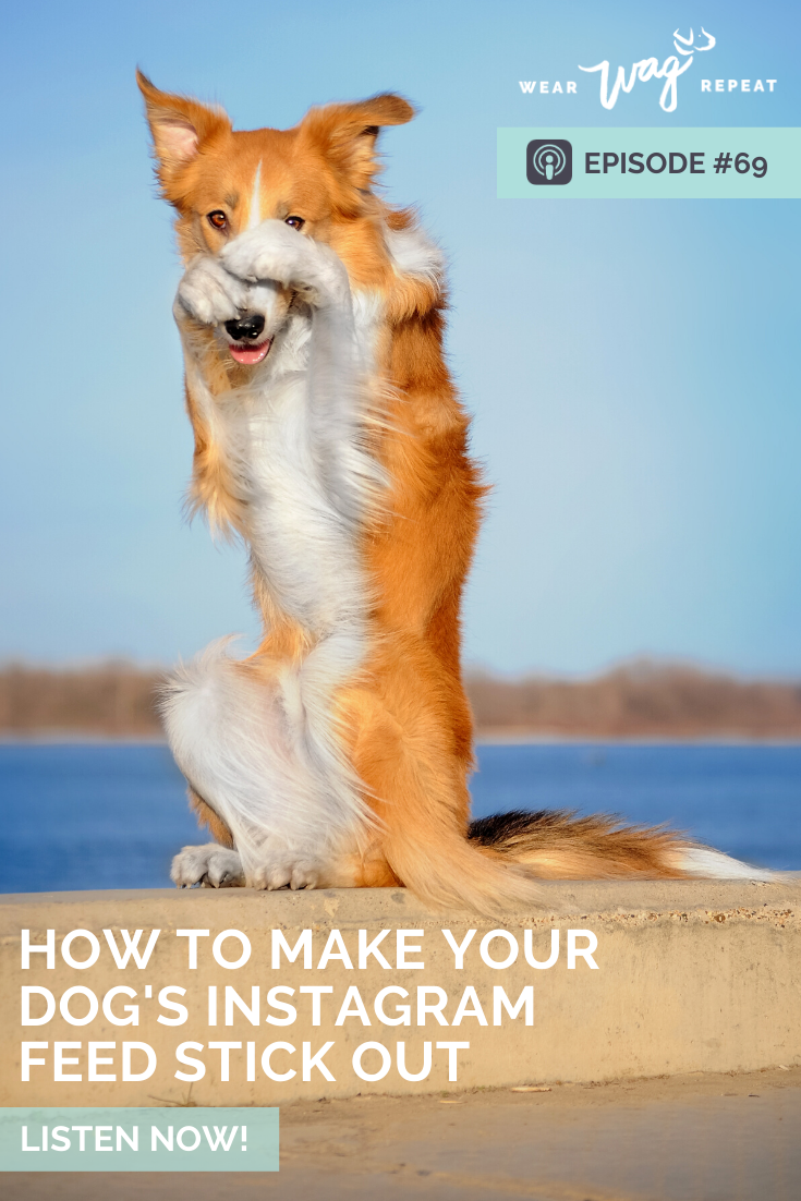 make your dog stand out on Instagram