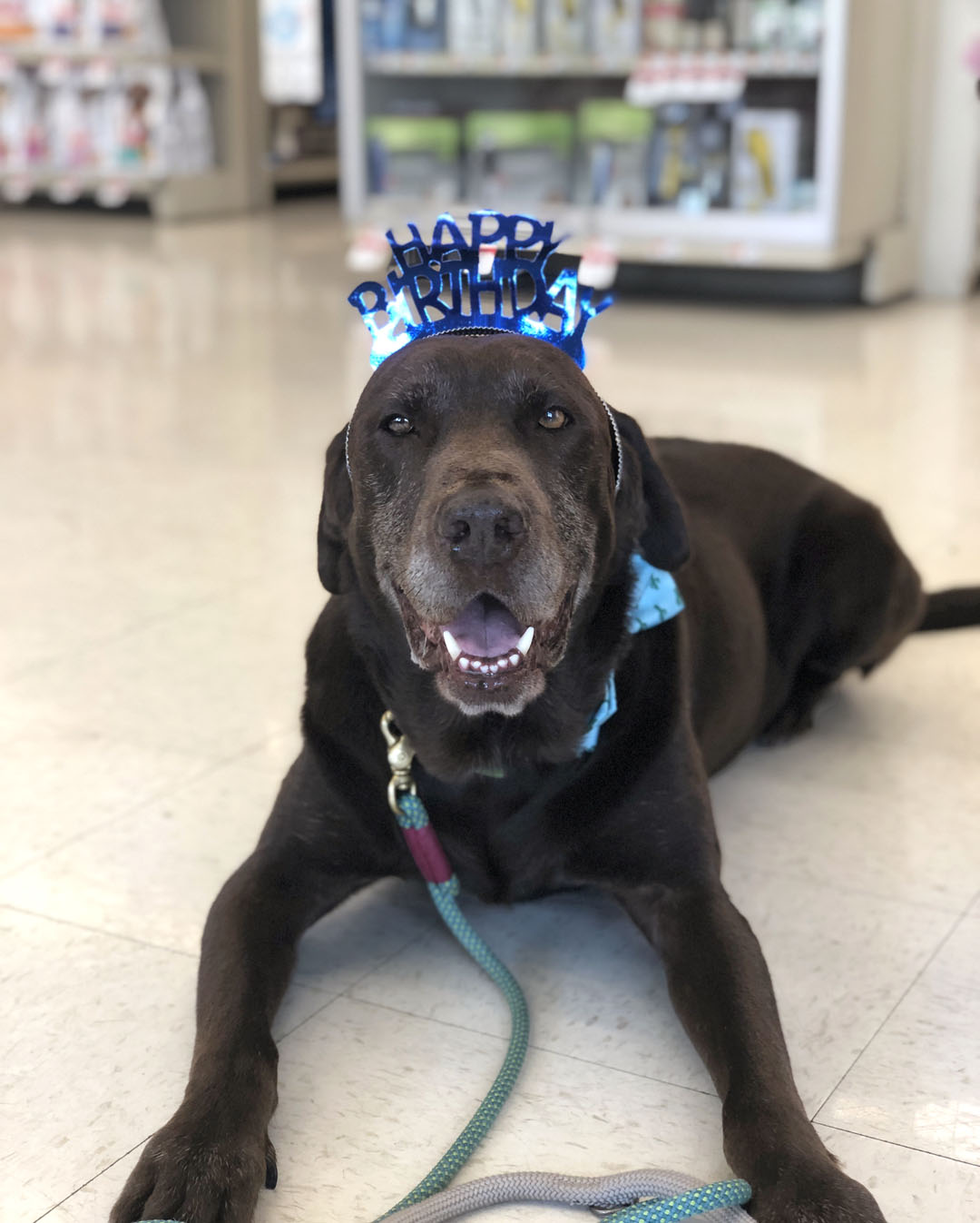 Dogust Birthday Bash at Our Local Pet Supplies Plus