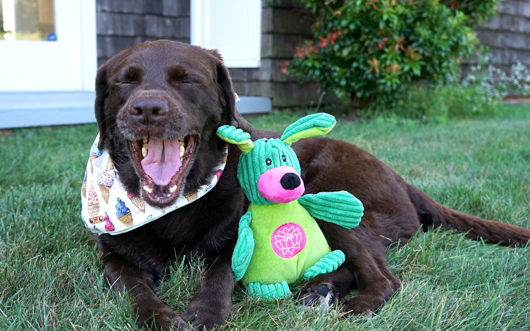 YogaHounds Toys Show Off Your Dog's Personality