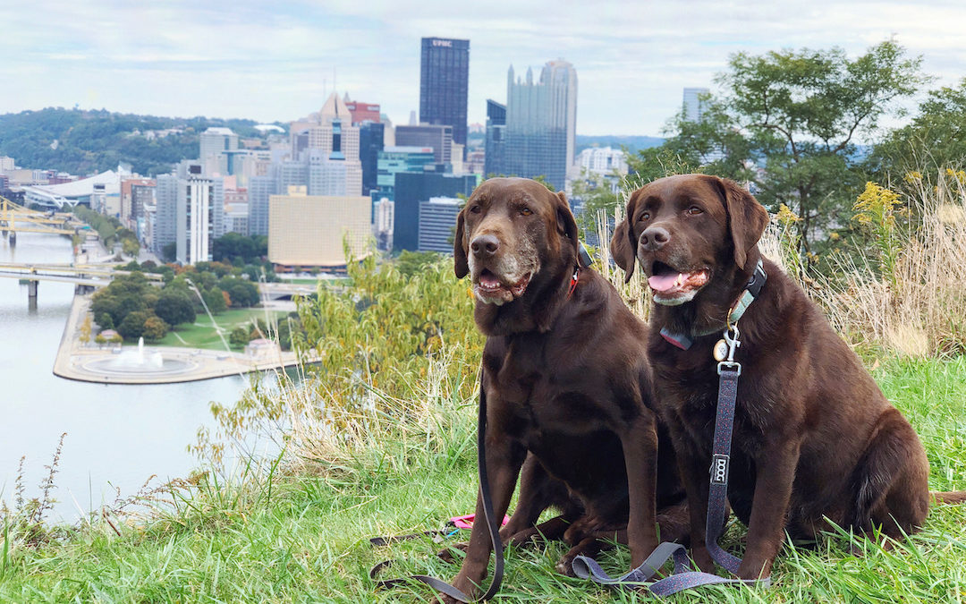 25 Things To Do With Your Dog In Pittsburgh