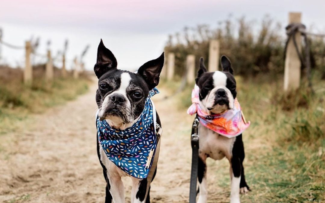 Your Favorite Dog Influencers Model for Wear Wag Repeat